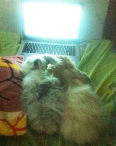 saat Lee dan Linka bersikap sok tahu nonton film di laptop