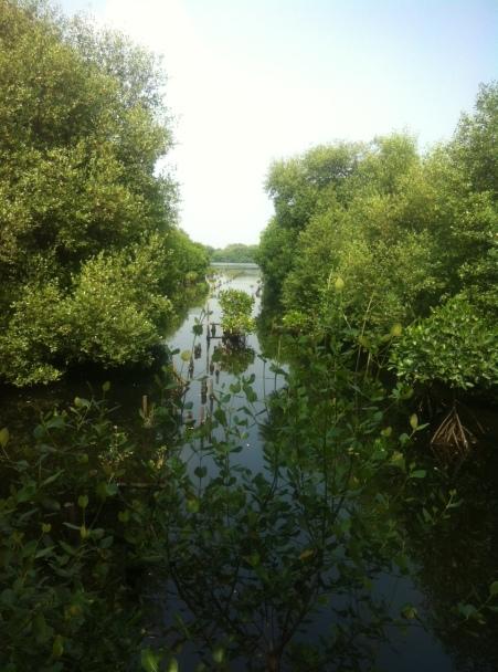 Penampakan hutan Mangrove