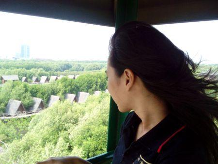 Penampakan hutan Mangrove jika dilihat dari atas