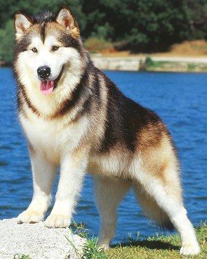 5 Anjing Galak Calon Penghuni Rumah Punyapista