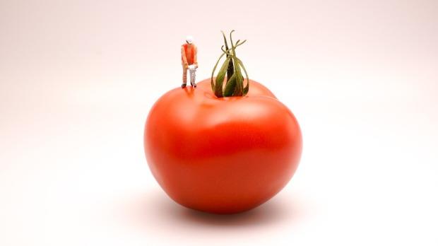 tomato-546964_960_720