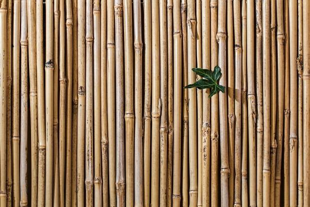 bamboo-2429954_960_720